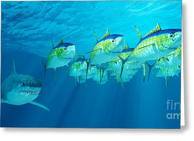 White Shark Greeting Cards - Yellowfin Tuna School Greeting Card by Corey Ford