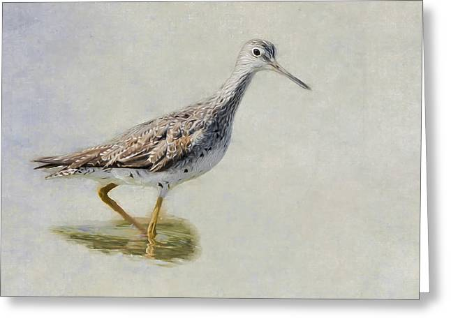 Yellowlegs Greeting Card by Bill Wakeley