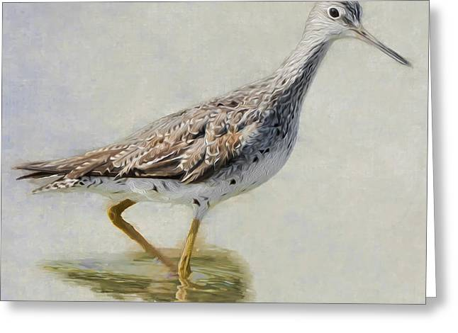 Sandpiper Greeting Cards - Yellowlegs Square Greeting Card by Bill  Wakeley