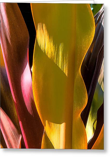 Fine Art Photography Greeting Cards - Yellows and Red Greeting Card by Geoff Mckay