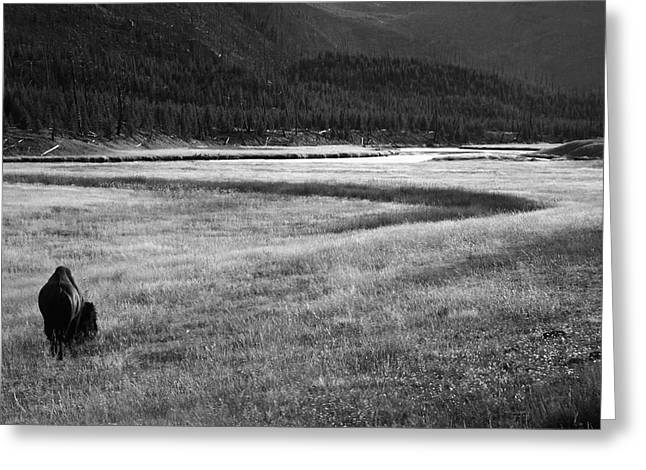 Super Volcano Greeting Cards - Yellowstone Bison Black and White Landscape Greeting Card by Aidan Moran