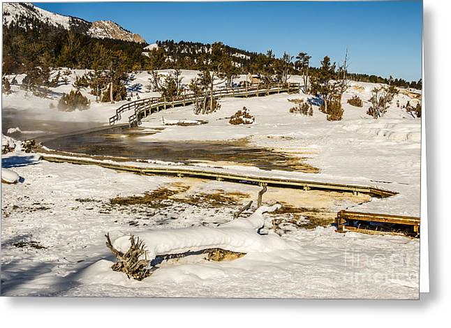 Yellowstone Hot Spring Greeting Card by Sue Smith