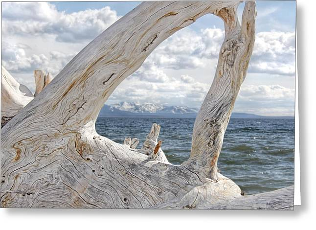 Light And Dark Greeting Cards - Yellowstone Lake Driftwood Greeting Card by Jennie Marie Schell