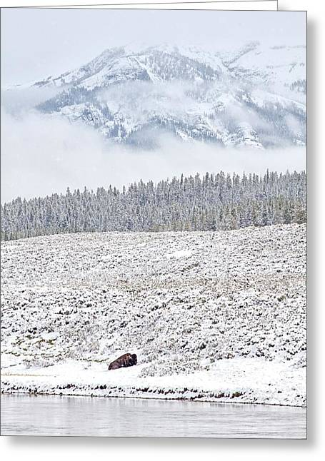 Natural Focal Point Photography Greeting Cards - Yellowstone Spring Snowstorm Greeting Card by Natural Focal Point Photography