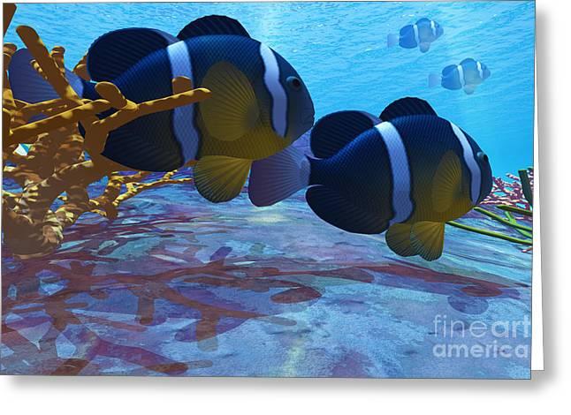 Yellowtail Clownfish Greeting Cards - Yellowtail Clownfish Greeting Card by Corey Ford