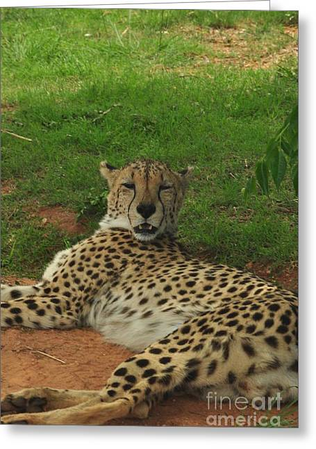 Jaguars Pyrography Greeting Cards - Yes I am fast Greeting Card by Juanita Doll