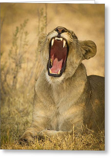 Growling Greeting Cards - Yes mom I brushed my teeth Greeting Card by Alison Buttigieg