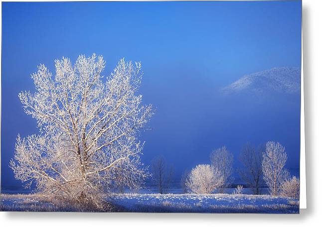 Winter Prints Greeting Cards - Yesterdays Blues Greeting Card by Darren  White