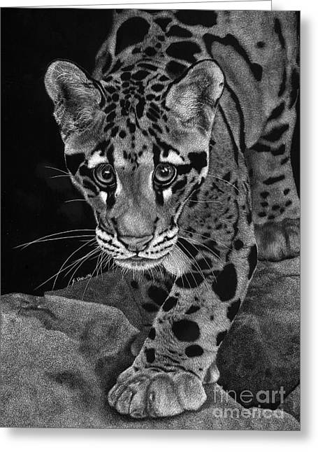 Photo Realism Drawings Greeting Cards - Yim - The Clouded Leopard Greeting Card by Sheryl Unwin
