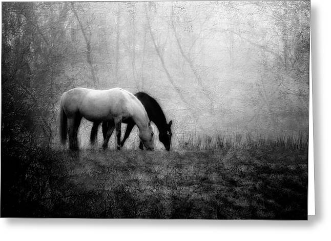 Quarter Horses Photographs Greeting Cards - Yin and Yang Greeting Card by Leslie Heemsbergen