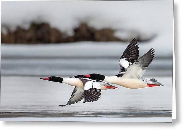Bird In Flight Greeting Cards - Yin Yang Square Greeting Card by Bill  Wakeley