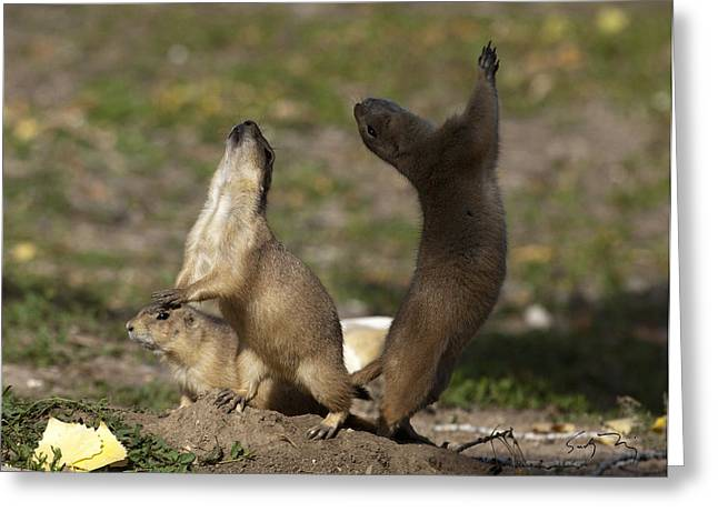 Yip Greeting Cards - Yip Dance Greeting Card by Sandy Nervig