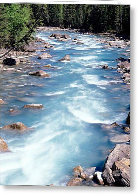 Tree Lines Greeting Cards - Yoho River, British Columbia, Canada Greeting Card by Panoramic Images