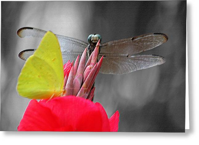 Metal Dragonfly Greeting Cards - Yoo Hoo II Greeting Card by Suzanne Gaff
