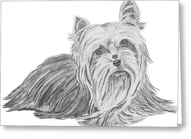 Dog Owner Drawings Greeting Cards - Yorkshire Terrier Drawing Greeting Card by Catherine Roberts