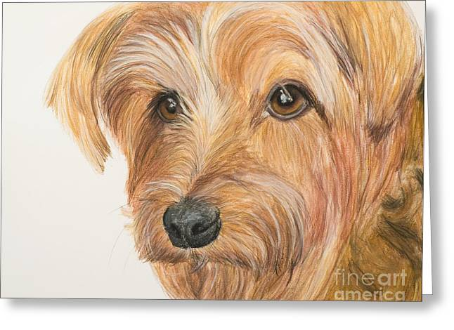 Doggy Pastels Greeting Cards - Yorkshire Terrier Face Greeting Card by Kate Sumners