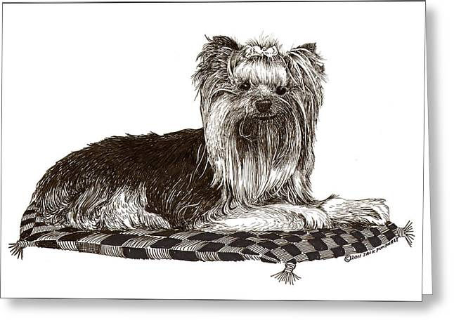 Man's Best Friend Drawings Greeting Cards - Yorkshire Terrier on checkered pillow Greeting Card by Jack Pumphrey