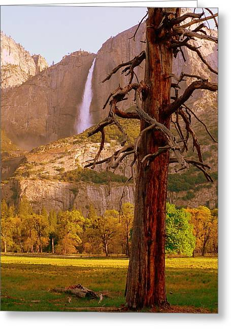 Reflections Of Sky In Water Greeting Cards - Yosemite Falls in Morning Greeting Card by Jeff Lowe