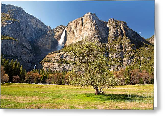 Lawn Greeting Cards - Yosemite meadow with tree Greeting Card by Jane Rix