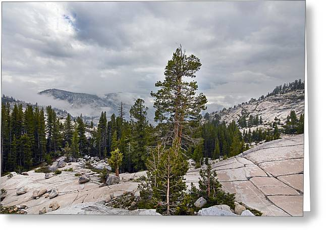 Mountaintop. Trees Greeting Cards - Yosemite National Park Greeting Card by Carol M Highsmith