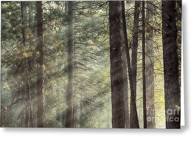 Yosemite pines in sunlight Greeting Card by Jane Rix