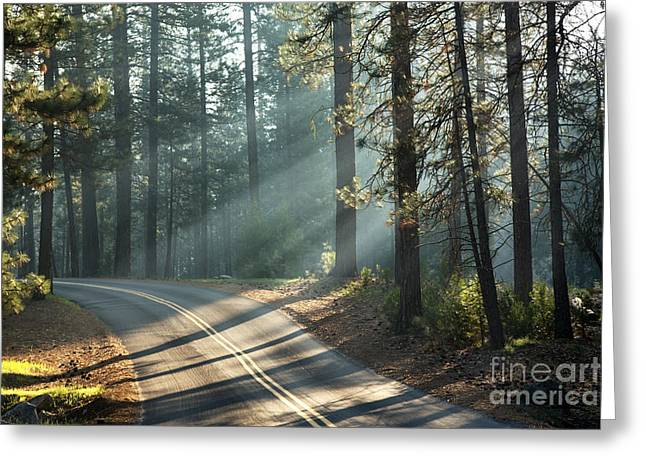 Conifer Tree Greeting Cards - Yosemite sunlight Greeting Card by Jane Rix