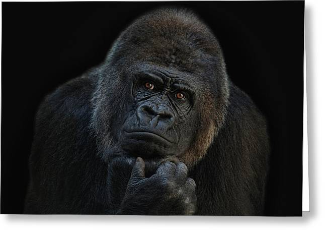Apes Greeting Cards - You ain t seen nothing yet Greeting Card by Joachim G Pinkawa