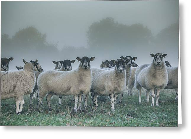 Clinton Greeting Cards - You and ewes army? Greeting Card by Chris Fletcher