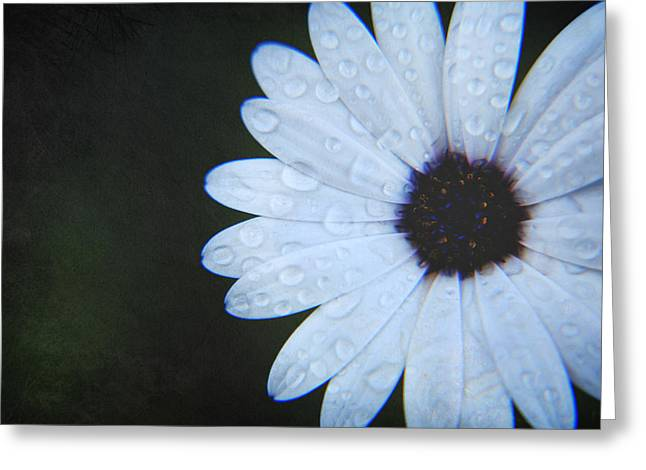 Texture Flower Greeting Cards - You Answered My Cry Greeting Card by Laurie Search