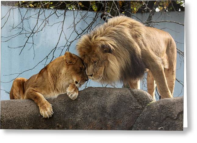 Recently Sold -  - Lioness Greeting Cards - You Are My Love Greeting Card by Ramabhadran Thirupattur