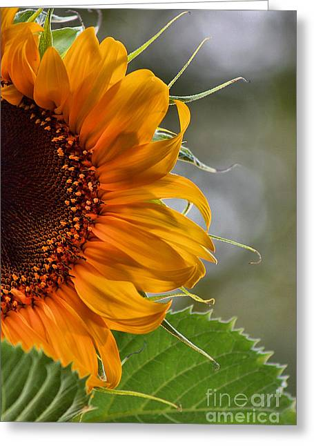 Yellow Sunflower Pyrography Greeting Cards - You Are My SUnshine Greeting Card by Andrea Ehmen