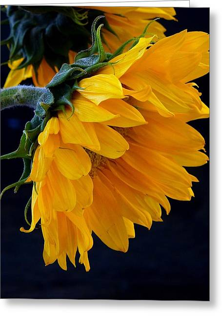 Green And Yellow Greeting Cards - You Are My Sunshine Greeting Card by Brenda Pressnall