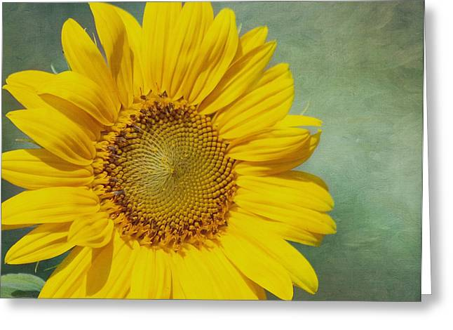 Yellow Sunflower Greeting Cards - You Are My Sunshine Greeting Card by Kim Hojnacki