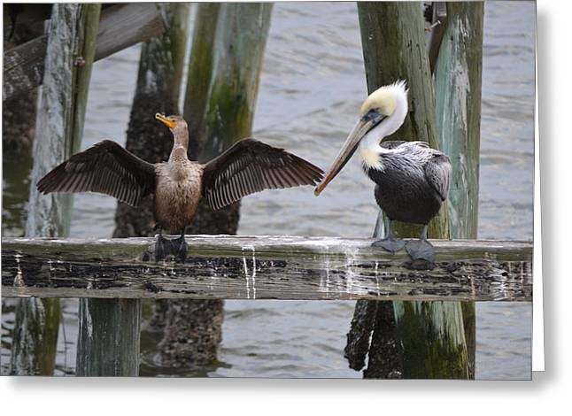 Cedar Key Greeting Cards - You are Not an Eagle Greeting Card by RoyD Erickson