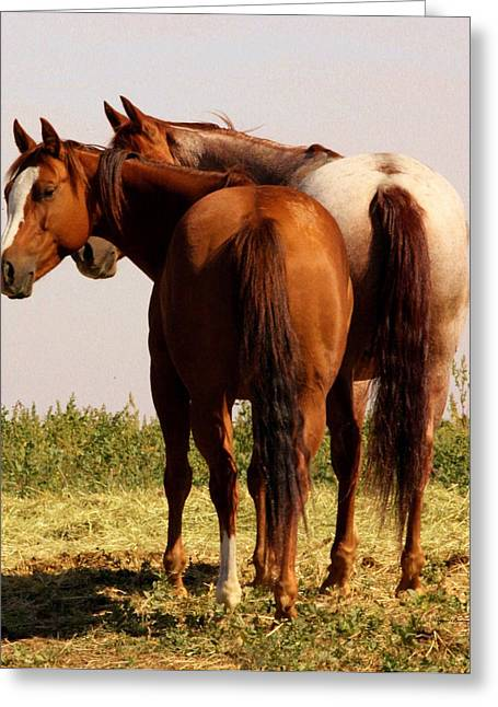Brown Horse Photographs Greeting Cards - You Called Greeting Card by Wayne Bonney
