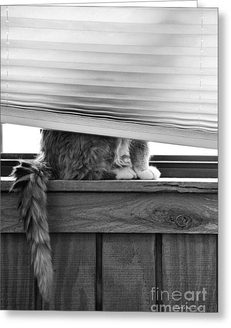 Ledge Greeting Cards - You Cant See Me Greeting Card by Karen Slagle