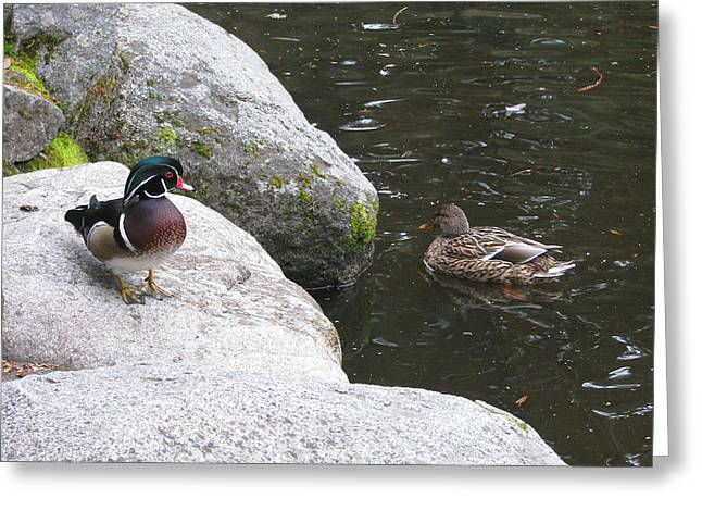 Pond In Park Greeting Cards - You Come Here Often Greeting Card by Brooks Garten Hauschild