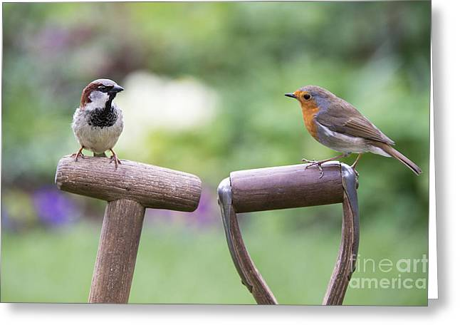 Small Birds Greeting Cards - You Gotta Friend  Greeting Card by Tim Gainey