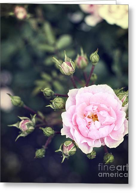 Bluish Green Greeting Cards - You had me at hello - pink rose photo Greeting Card by Ivy Ho