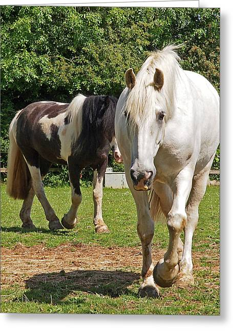 Lovers Artwork Greeting Cards - You Lead Ill Follow - Horse Friends Greeting Card by Gill Billington