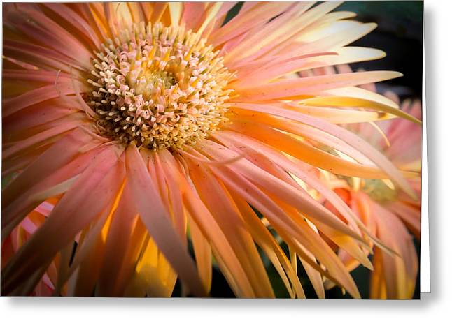 Coral Colors Greeting Cards - You Light Up My Life Greeting Card by Karen Wiles