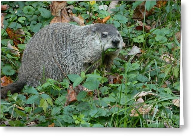 Groundhog Digital Greeting Cards - You Looking At Me? Greeting Card by Emmy Marie Vickers