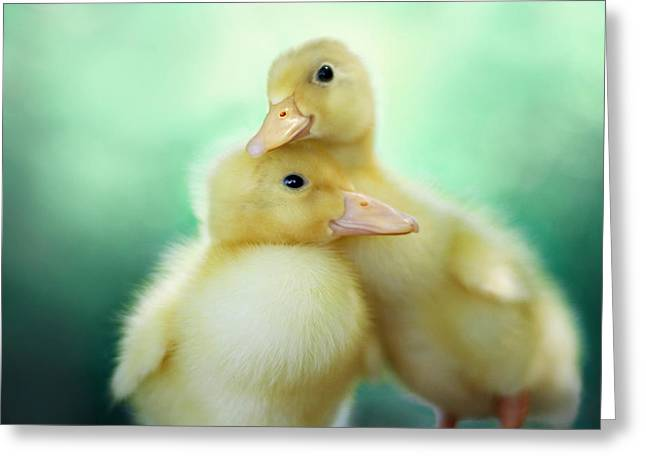 Ducklings Greeting Cards - You Make Me Smile Greeting Card by Amy Tyler