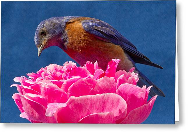 Passeriformes Greeting Cards - You move and I have my lunch Greeting Card by Jean Noren
