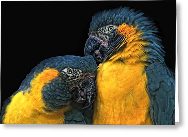 Blue And Yellow Macaw Greeting Cards - You Sexy Thing Greeting Card by Joachim G Pinkawa