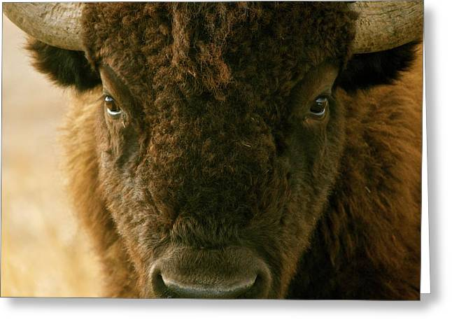 Buffalo Pyrography Greeting Cards - YOU SHALL NOT PASS sepia Greeting Card by Peggy Detmers