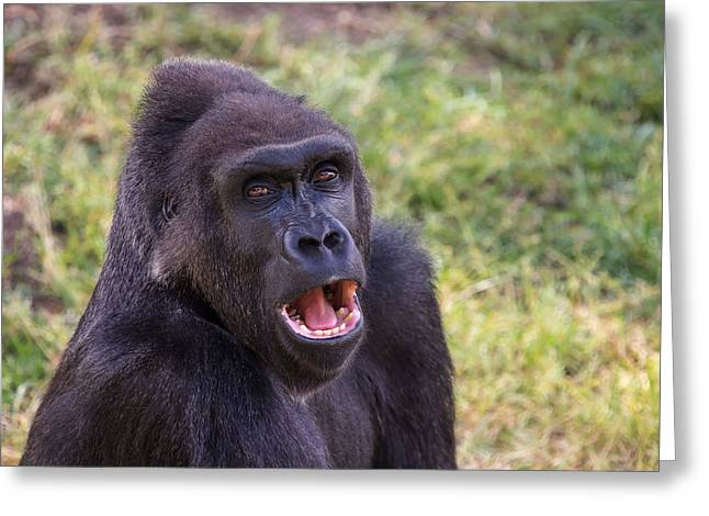 Congo Decor Greeting Cards - You Talkin To Me? - Gorilla Chat Greeting Card by Henry Inhofer