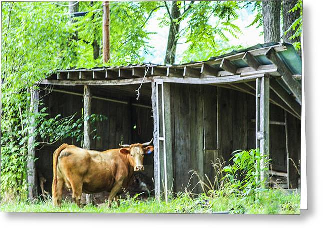 Barn Yard Greeting Cards - You Talking to Me Greeting Card by Robert J Andler