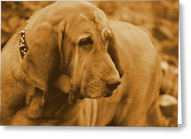 Slobber Greeting Cards - You ve Got My Full Atttention   Greeting Card by Rosemarie E Seppala