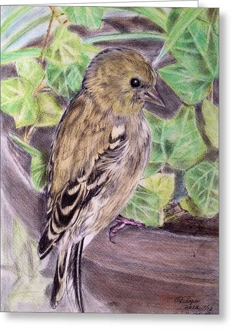 Olive Green Pastels Greeting Cards - Young American Gold Finch Greeting Card by Keiko Olds